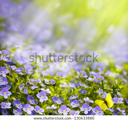 spring wild flowers in the sunlight background