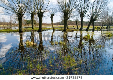 Spring willows. Kampinos National Park (Kampinoski Park Narodowy), Mazovia, Poland. - stock photo