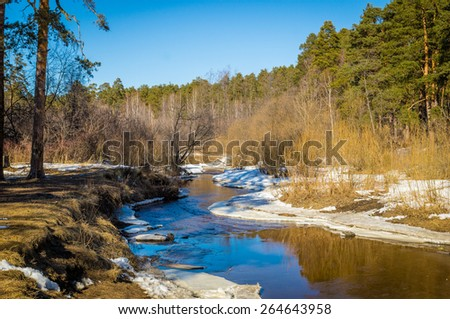 Spring wood on river bank, Ural Mountains, Russia