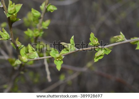 spring, young leaves