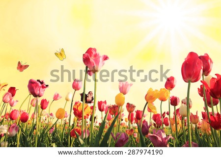 springlike sunny background with tulip blossoms and butterflies - stock photo