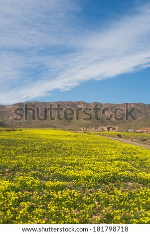 Springtime at Cabo de Gata Natural Park, Spain