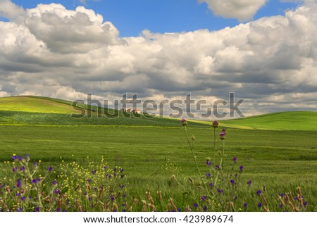 SPRINGTIME.Between Apulia and Basilicata.Hilly landscape with corn field immature, dominated by clouds.ITALY. In the background a farm and a tractor.