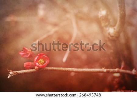springtime blooms vintage background  - stock photo