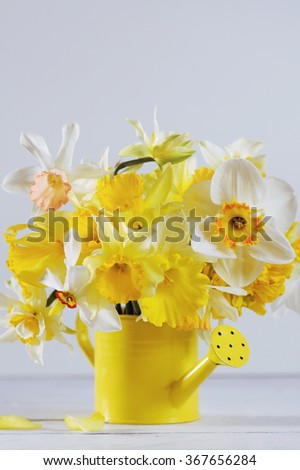 Springtime colored daffodils in full bloom in yellow vase - stock photo