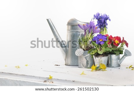 springtime flower in metal watering can on white table  - stock photo