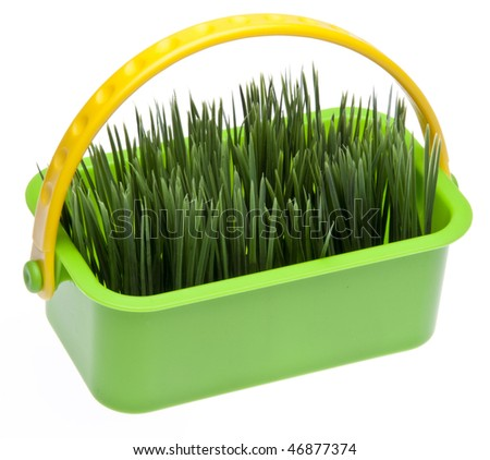 Springtime grass in a vibrant green basket isolated on white with a clipping path.