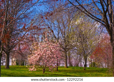 Springtime Grassy Hillside with Castle and Blooming Trees - stock photo