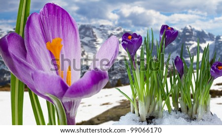 Springtime in Dolomites mountain, Italian Alps - stock photo