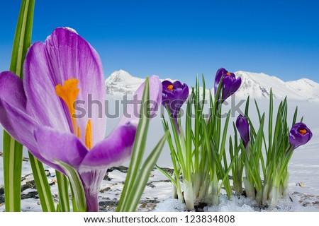 Springtime in  mountain, Italian Alps - stock photo
