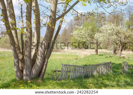 Springtime meadow in rural Germany. - stock photo