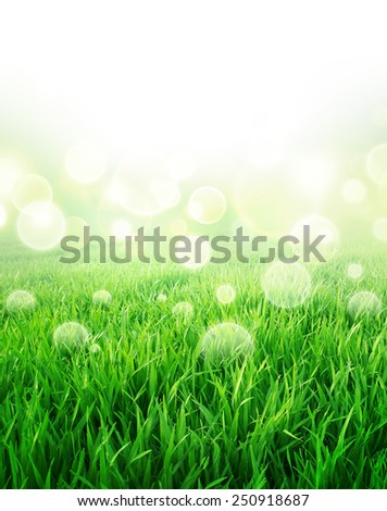 Springtime sensation. Abstract background of a green grass field slowly growing