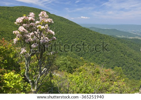 Springtime view from the mountains with blooming mountain laurel.
