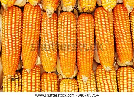 sprinkled corn background - stock photo