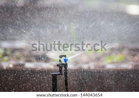 Sprinkler and plants in farm - stock photo