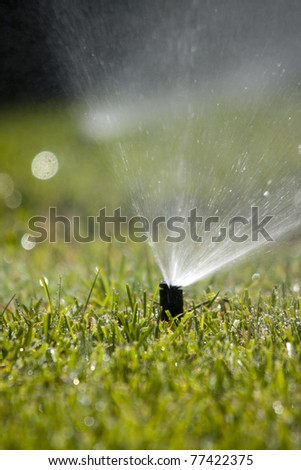 sprinkler head dispersing water on grass