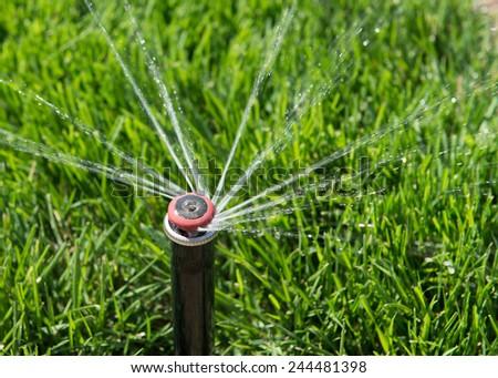 Sprinkler head spraying water over green grass. - stock photo