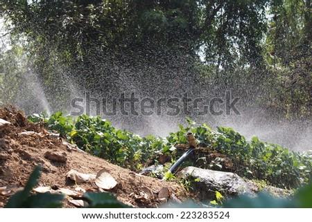 sprinkler in garden strawberry - stock photo