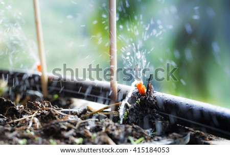 Sprinkler Systems, Drip Irrigation, Watering Lawns And Gardens With Blurred  Water On The Background