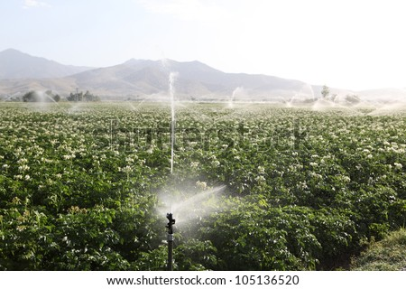 Sprinkler while Irrigating a field - stock photo