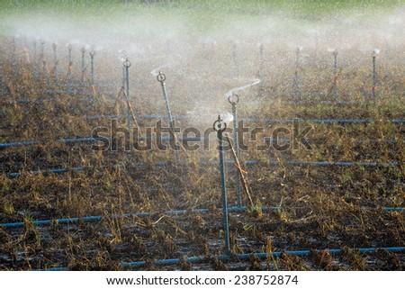 Sprinklers in plots planted. - stock photo