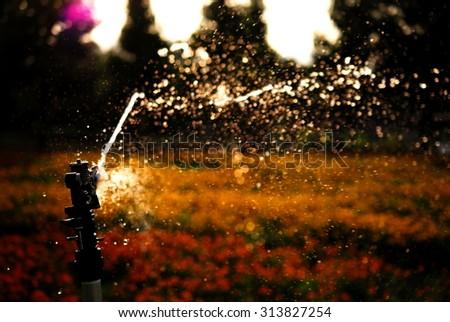 sprinkling. - stock photo