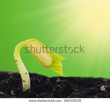 Sprout beans in the ground on a green background
