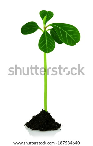 sprout from the ground, a new life - stock photo