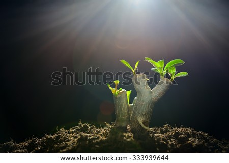 Sprout growing from tree branch in the morning light - stock photo