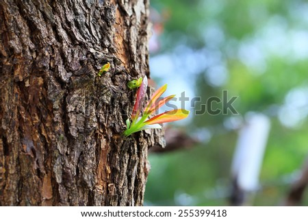 sprout growing from tree, new or start or beginning concept - stock photo