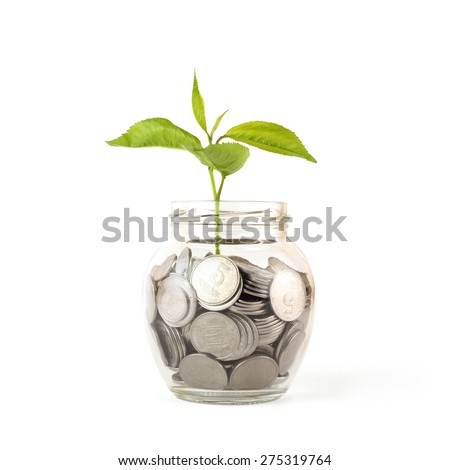 Sprout growing on glass piggy bank  isolated on white - stock photo