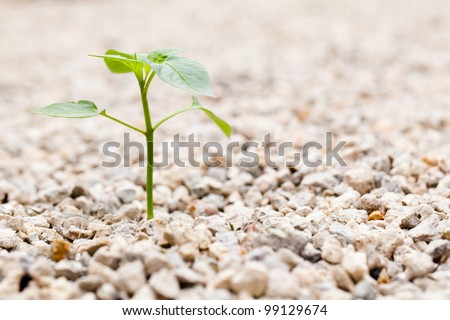 Sprout growing out of Rock in the Garden - stock photo