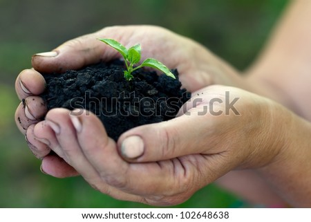 Sprout growing out of the ground which is in women's hands - stock photo