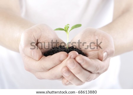 Sprout in hands on white background