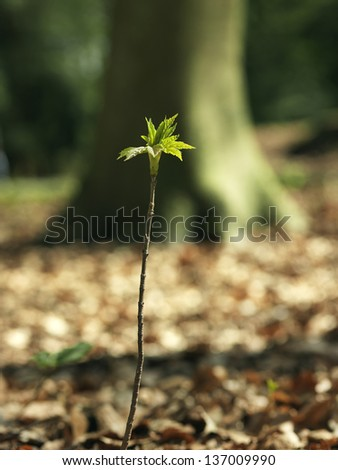 Sprout in the forest - stock photo