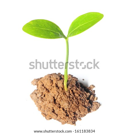 Sprout of a new life - stock photo