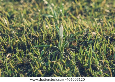 Sprout of first spring flower, concept of new life. Shallow depth of field - stock photo