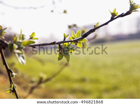 Sprout on a tree in the fields, horizontal image