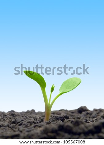 Sprout on blue sky background. - stock photo