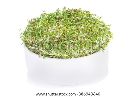 Sprouted alfalfa seeds on a white background.