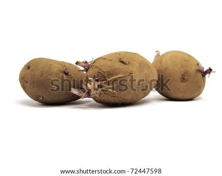 sprouting baking potato on white background - stock photo