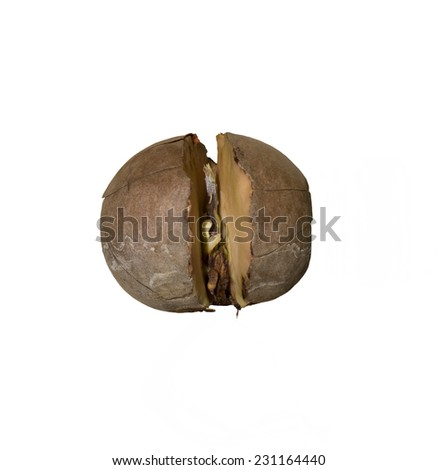 Sprouting seed (Avocado tree, Persea americana) isolated with white background - seed only