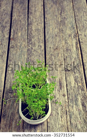 Sprouts fresh cress in a white container. Selective focus. - stock photo