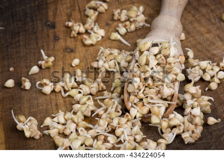 sprouts of buckwheat groats on wooden spoon - stock photo