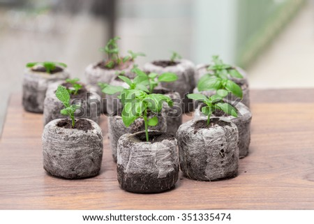 Sprouts of herbs planted in grow pallets - stock photo