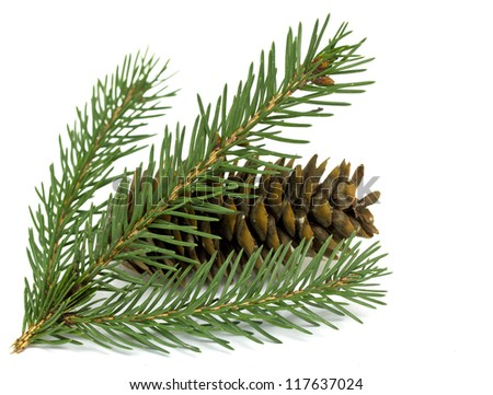 Spruce branch with cones - stock photo