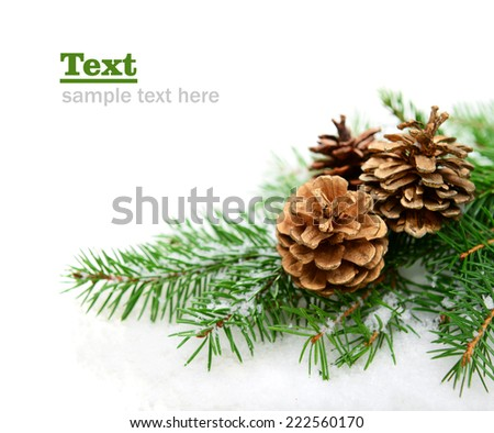 spruce branch with cones in the snow on a white background - stock photo