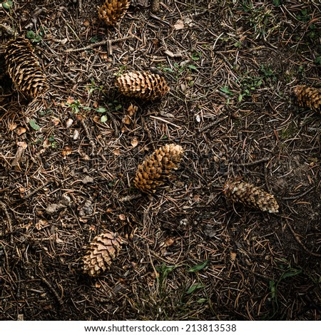 Spruce cones on the garden floor with dry needles. Aerial perspective and vignetting. - stock photo