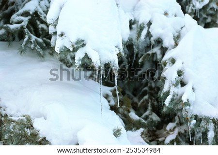 Spruce covered with snow and icicles, closeup view - stock photo