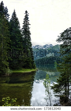 Spruce green forest in evening, Montenegro. - stock photo